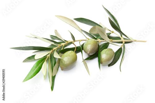 Ramoscello con olive - 29400593