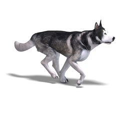Alaskan Malamute Dog. 3D rendering with clipping path and