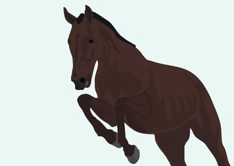 Gallop horse along on a white background