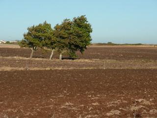 Árvore no campo, em Agosto