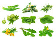 Medicative herbs