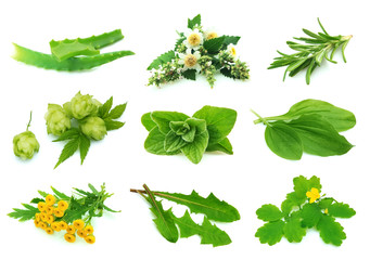Medicative herbs