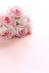 Pink roses on pink background