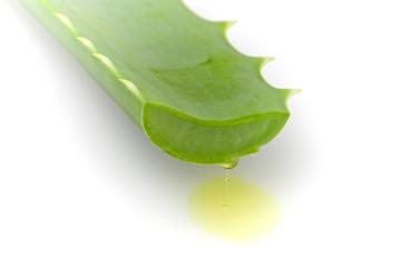 Aloe Vera dripping sap