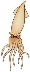 Cuttlefish - colored cartoon illustration