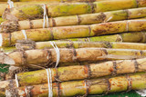 Stalks of Sugarcane
