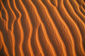 Insect tracks in the sand of the Sahara.
