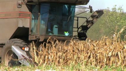 Combine Harvesting Corn 02