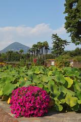 A garden on Lake Maggiore