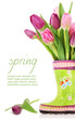 Spring tulip flowers in boots