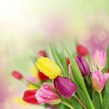Fototapeta Spring tulip flowers