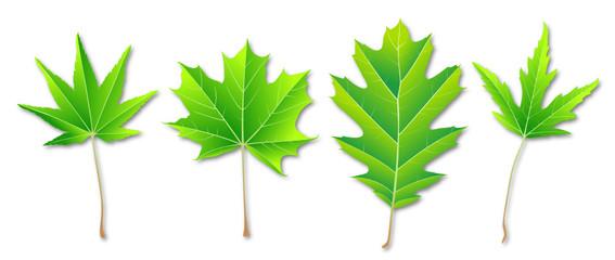[V] 4 grüne Blätter (seg.) / d