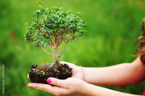 Tuinposter Bonsai bonsai