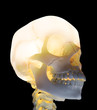Glowing skull - healthcare anatomy image