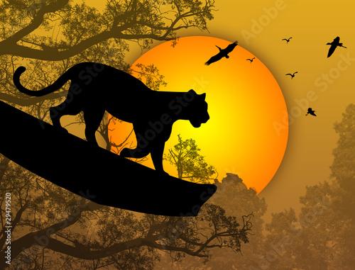 pantera-na-drzewie