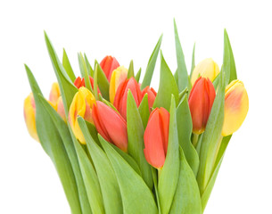 yellow and red variegated tulips flowers;