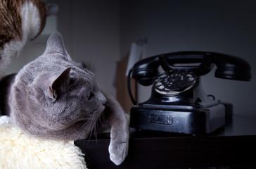 Zwei Katzen und Telefon
