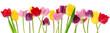 Leinwanddruck Bild - Spring tulip flowers in a row