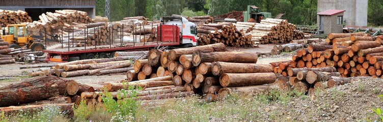 log timber trunks wooden industry stock