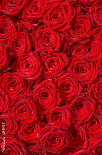 Rote Rosen, Symbol für Liebe, Edelrosen, Hochzeit