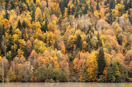 Autumn forest at mountain lake