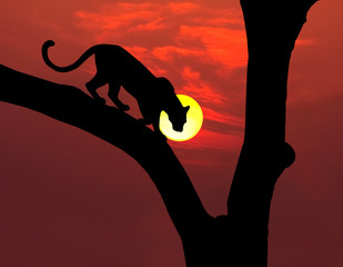 african leopard silhouette