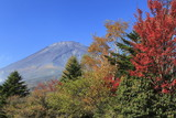 Mt. Fuji in Autumn Color