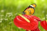 Schmetterling 93