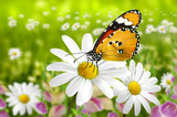 Schmetterling 103