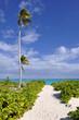 Sandy path leading down to beach on the island of Eleuthera