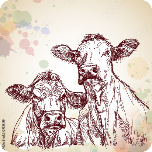 two cows hand draw sketch & color paint - 29538159