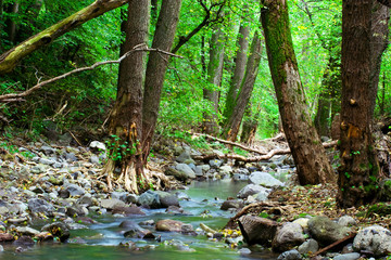 Green forest with mountain creek