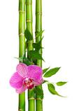 Fototapeta roślina - kiełkowy - Inne Przedmioty