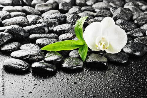 Fototapeten,growth,spriessen,symbol,balance