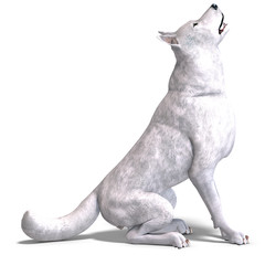 White Wolf. 3D rendering with clipping path and shadow over
