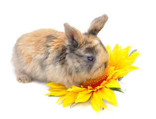 rabbit with yellow flower