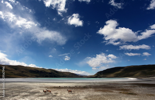 Foto op Plexiglas Lama Guanacos and salt lake