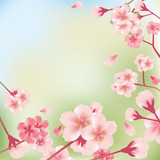 Cherry Blossoms Background - 29576324