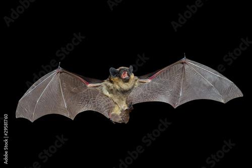 Bat 8