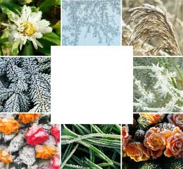 """Collage """"Frost"""" mit Textfreiraum"""