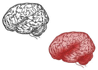 vector illustration of human brain