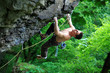 Rock climber on route