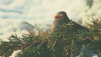 Uccello dietro rami