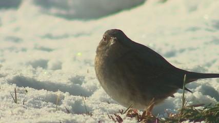Uccello a terra su neve
