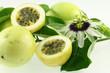 fleur et fruits de passiflora edulis, fruit de la passion