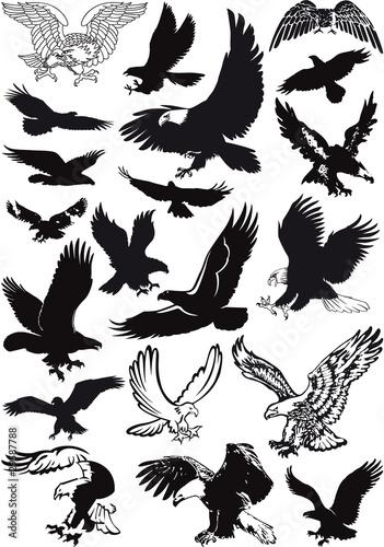 Fototapeta vector eagles collection