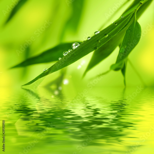 Bamboo leaves over water