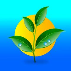 pianta ramoscello