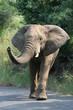 Fototapeten,elefant,wildnis,saeule,tier