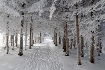 Breiter Waldweg im Winterzauber